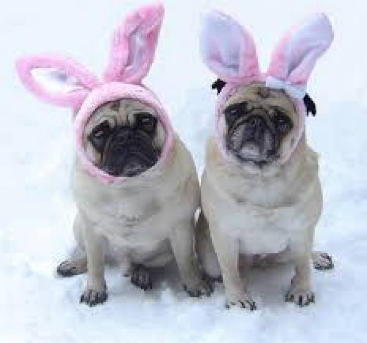 Hop in to Dog Money for Easter Brunch 11:00 AM to 3:00 PM. Special…